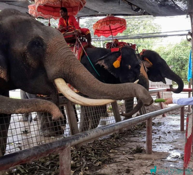 象の餌やり体験もできる。