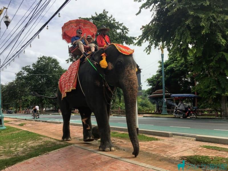 街中を象に乗って散歩することができる