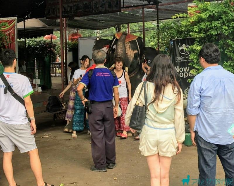 40バーツで,象と一緒に写真を撮ることができる
