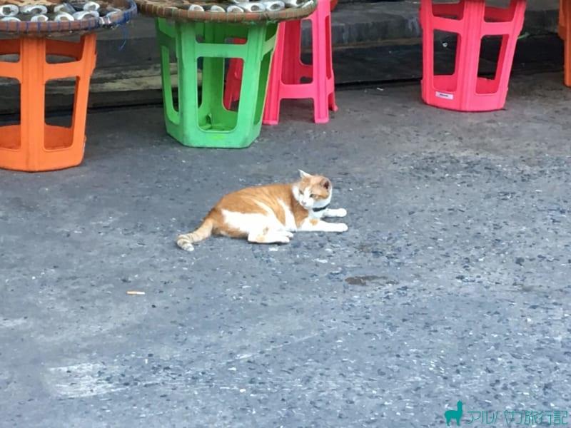 エビセンター内の道路でくつろいでいるネコ